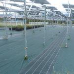 営農型太陽光発電